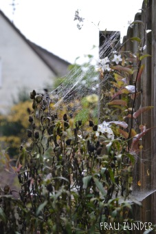 Spinnenweben mit Tautropfen an Pflanze und Zaun im Herbst, Bad Mergentheim