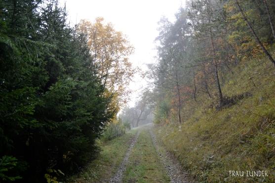Feldweg in der Natur am Waldrand im Herbst, Bad Mergentheim