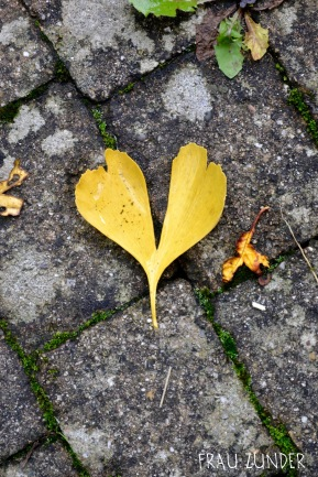 Ein gelbes Ginkoherz, Herbstlaub, Ginko, Herbst, Bad Mergentheim
