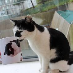 Fergus mit seiner Tasse ©EssexCampusCat