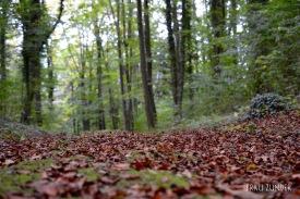 Wald Spaziergang in Würzburg im Herbst