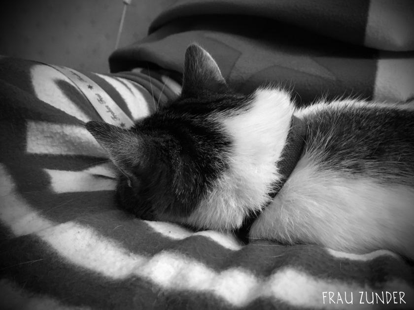 Findus entspannt in seinem Katzenleben