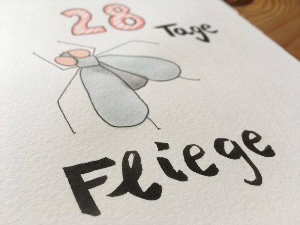 Fliege Aquarell Wasserfarbe Illustration