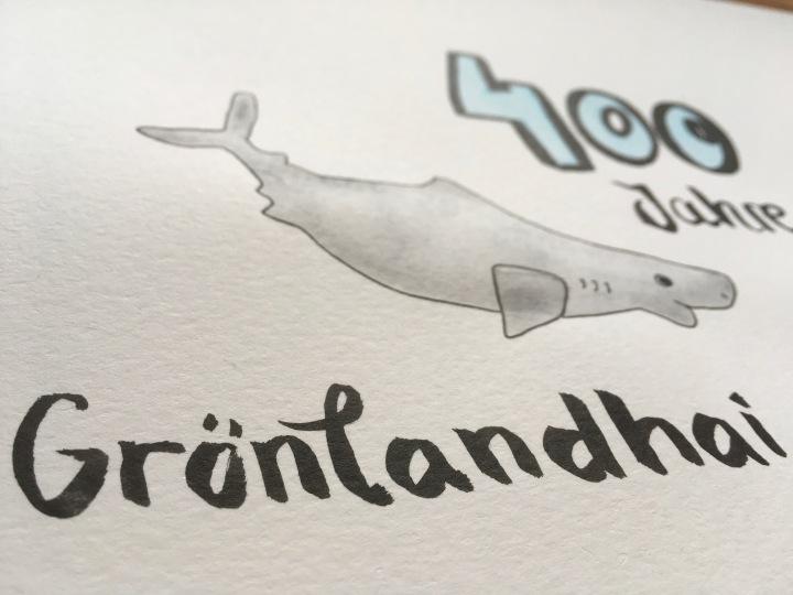 Grönlandhai Auarell Wasserfarbe Illustration
